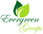 Evergreen Groups